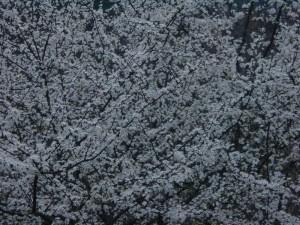 Espino-Blanco-a18016045[1]